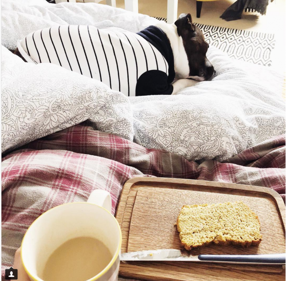 Dog in pyjamas and breakfast in bed