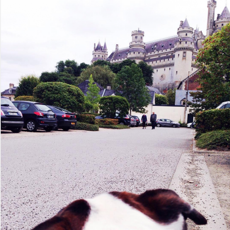 Microthedog looking at Pierrefonds