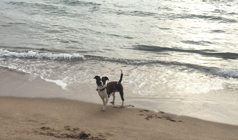 microthedog at the beach at sunrise